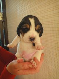 http://berezhki.net/beagle/10d/sm/batman1.JPG