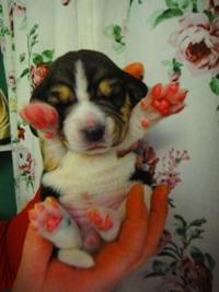 http://berezhki.net/beagle/10d/sm/marta.JPG