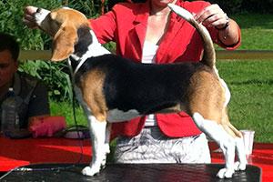 http://berezhki.net/beagle/MAMA1.JPG