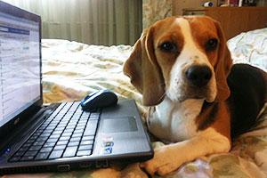 http://berezhki.net/beagle/MAMA2.JPG