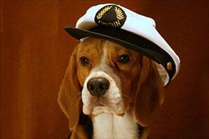 http://berezhki.net/beagle/PAPA2.jpg